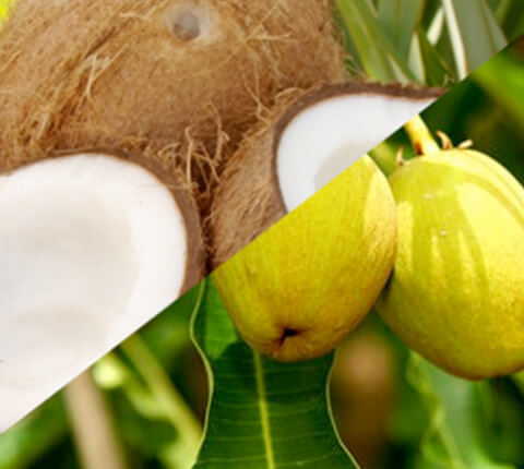 anticaerboristeria_it_ingredienti_cocco_karite_480x430
